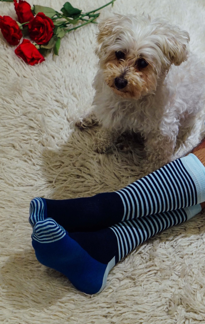 Happy Socks featuring Mr Wilson, our resident psychologist & therapy dog.