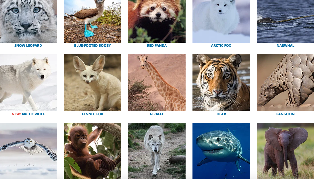 World Wild Life Fund makes a great gift