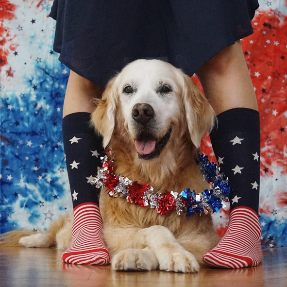 "Happy Socks. Photo: <a href=""http://www.instagram.com/goldenwoofs/"" target=""_blank"">@goldenwoofs</a>"