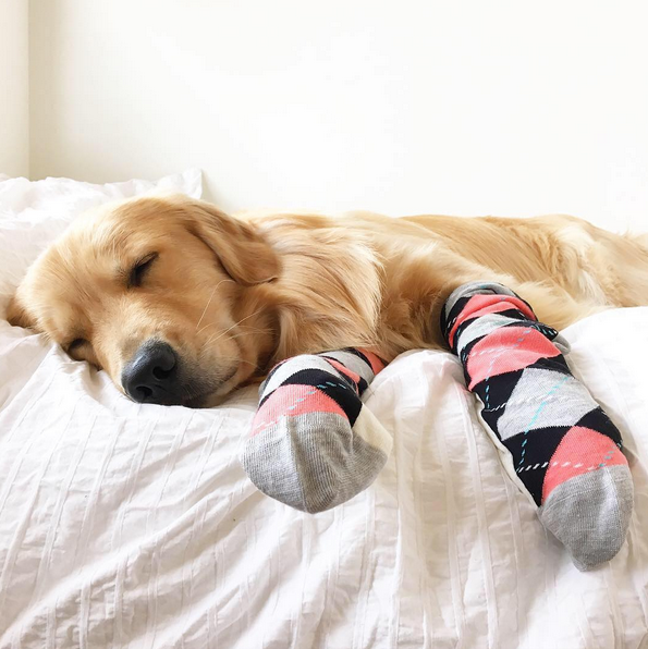 "Happy Socks! Photo: <a href=""http://www.instagram.com/porter_the_golden/"" target=""_blank"">@porter_the_golden</a>"